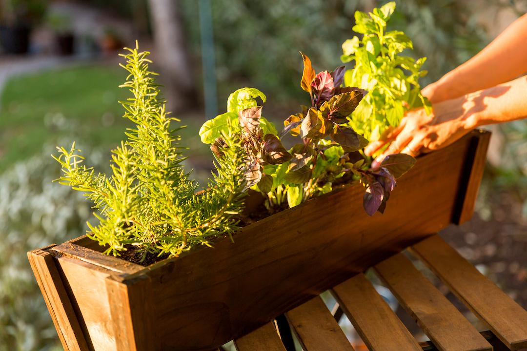 Growing Herbs In Pots Brings Fresh Flavors Within Reach Of Every Gardener,  No Matter What Size Your Yard Is. Containers Are Portable And Can Be Placed  ...