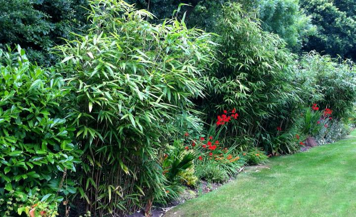 How to Grow Bamboo - Miracle-Gro