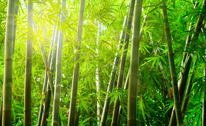 Growing Bamboo 2