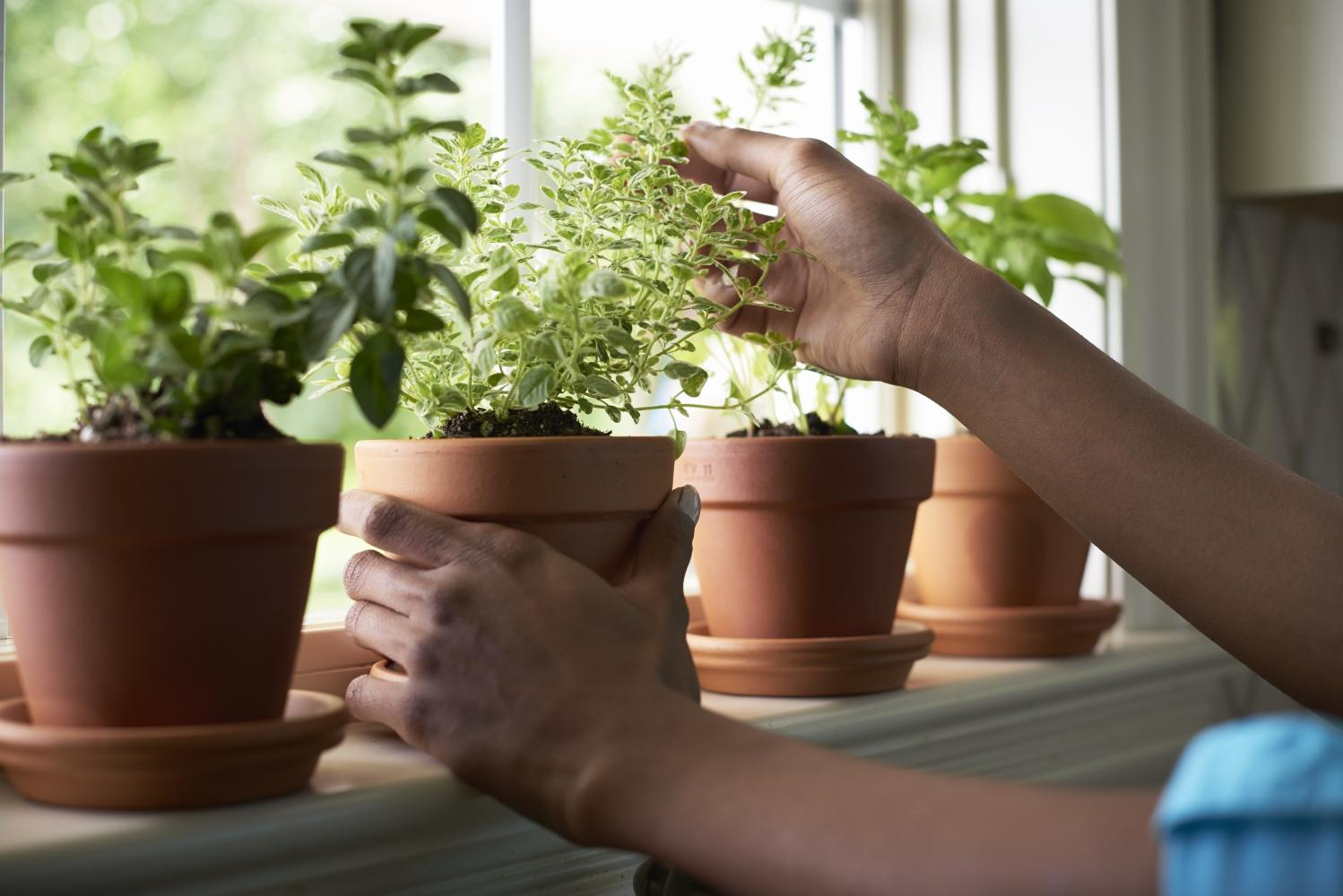 A sunny windowsill is the perfect place for an indoor herb garden.