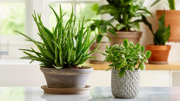 How To Grow Succulents Miracle Gro