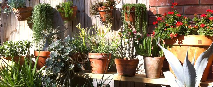 Charmant Potted Plants On Wall