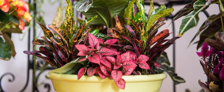 How To Care For Houseplants Indoor Gardening Miracle Gro