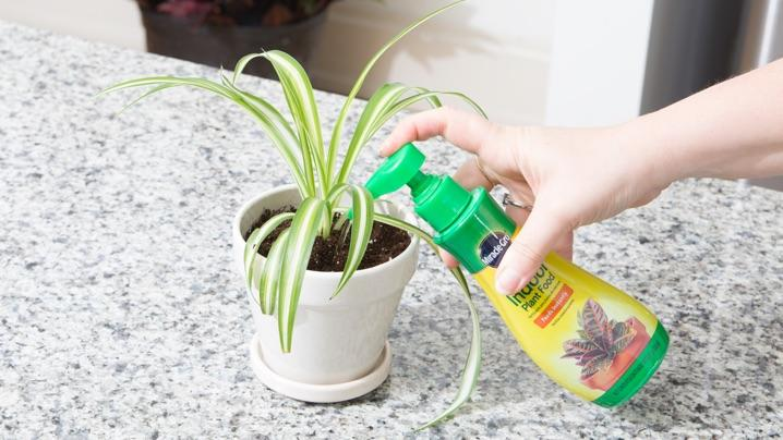 How to Grow Spider Plants