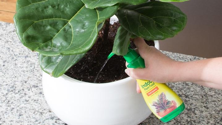 miracle gro plant food instructions