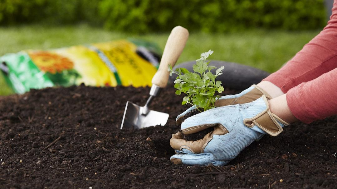 10 Top Gardening Tips for Beginners | Miracle-Gro