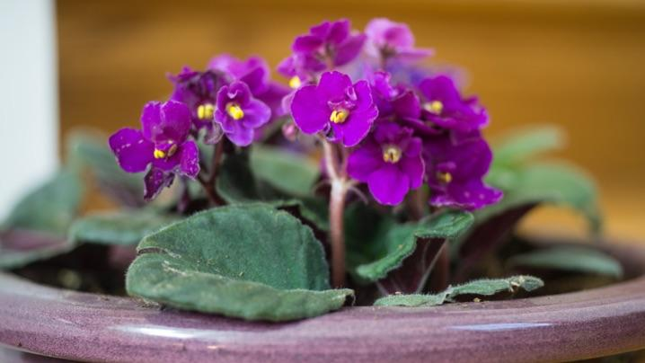 How to Grow African Violets | Miracle-Gro