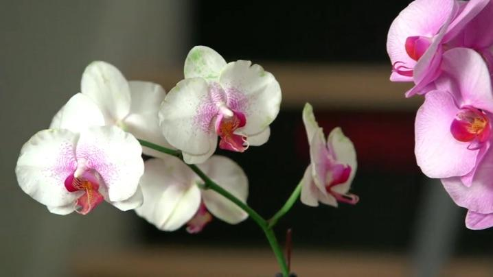 how to grow orchids miracle gro