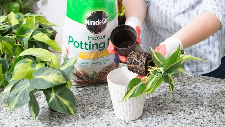 How to Grow Philodendrons   Miracle-Gro