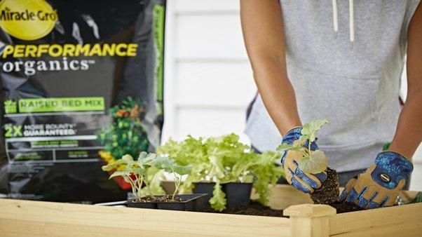 How to Choose the Right Organic Products: Organic Raised Bed Soil