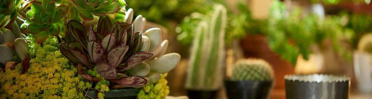Succulents Hero Shot