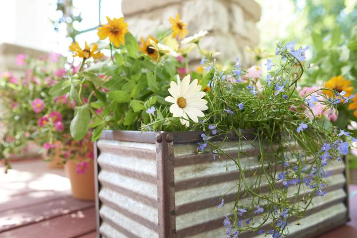 Container garden on table with beautiful orange, blue, and white flowers.