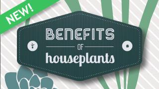The Benefits of Houseplants - An Infographic