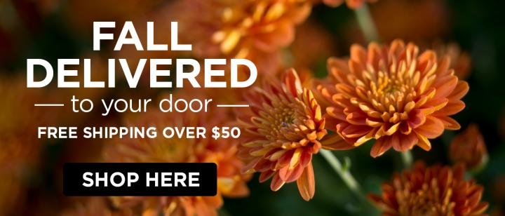 Fall delivered to your door - Free shipping over $50 - Shop here - Flowers growing in a garden.