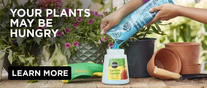 Your Plants May Be Hungry: hands pouring Miracle-Gro®️ plant food into the Miracle-Gro®️ Garden Feeder with potted plants in the background