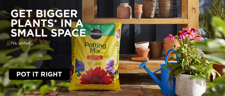 A bag of Miracle-Gro Potting Mix sits on the floor of a greenhouse.