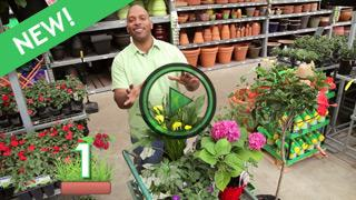 Top 10 Gardening Tips with William Moss