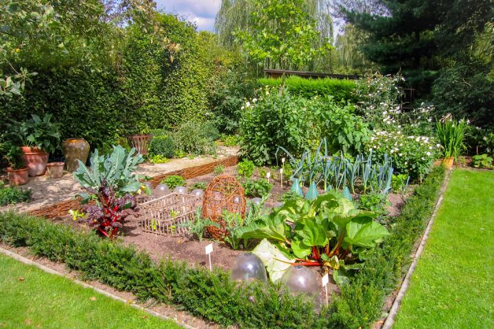 In-ground garden with green foliage and growing vegetables.