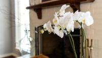 orchid growing indoors by fireplace