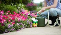 When to Fertilize Plants: Woman holding hose and adding Miracle-Gro® plant food to watering can next to flower bed