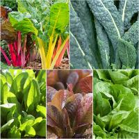 Miracle-Gro® Fresh Salad Garden Bundle