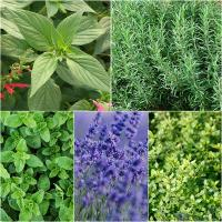 Miracle-Gro® Aromatic Herb Garden