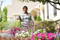 Summer Flowers: woman using hose to water landscape bed with pink, white, and purple annual and perennial flowers