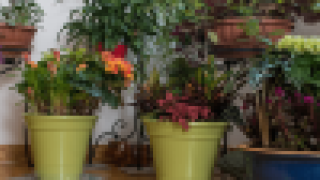 Image of house plants in pots