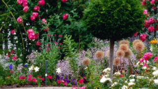 Image of a colorful garden