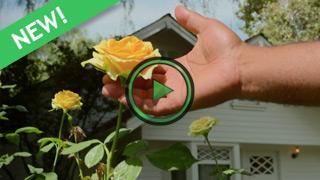 Simple Tips for Rose Care with William Moss