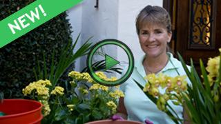 How To Design Indoor Containers with Teena Spindler