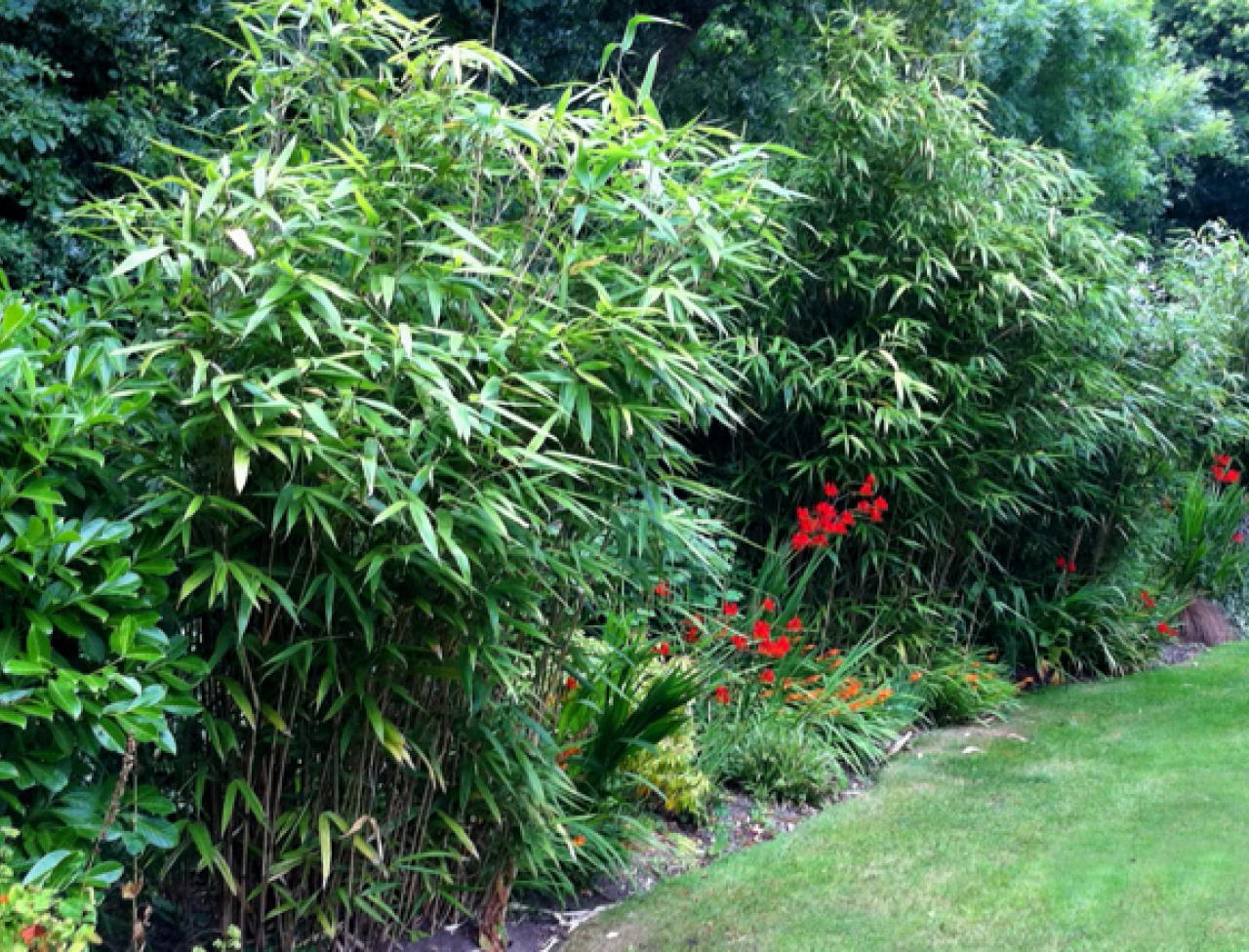 How To Grow Bamboo Miracle Gro, How To Care For Outdoor Bamboo Plants
