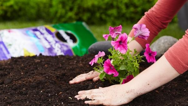 Best Plants to Attract Pollinators: planting pansies