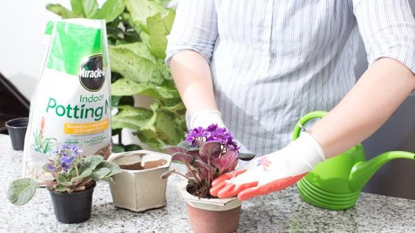 woman planting African violet in Miracle-Gro® Indoor Potting Mix