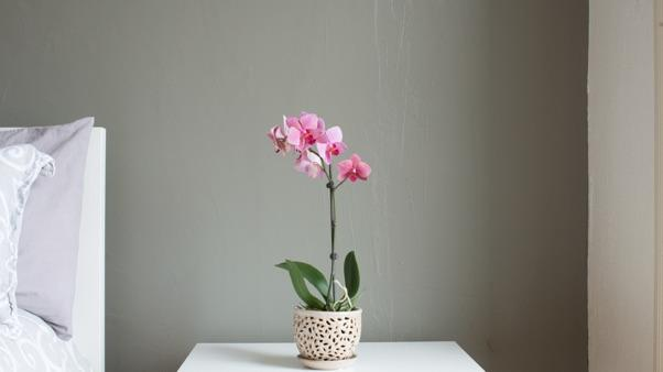 orchid on white bedside table