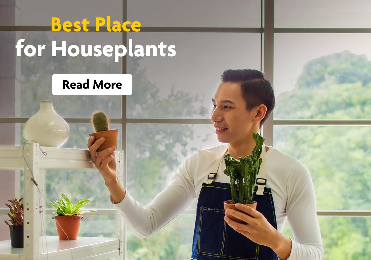 A man in an apron holds succulents in his hands.