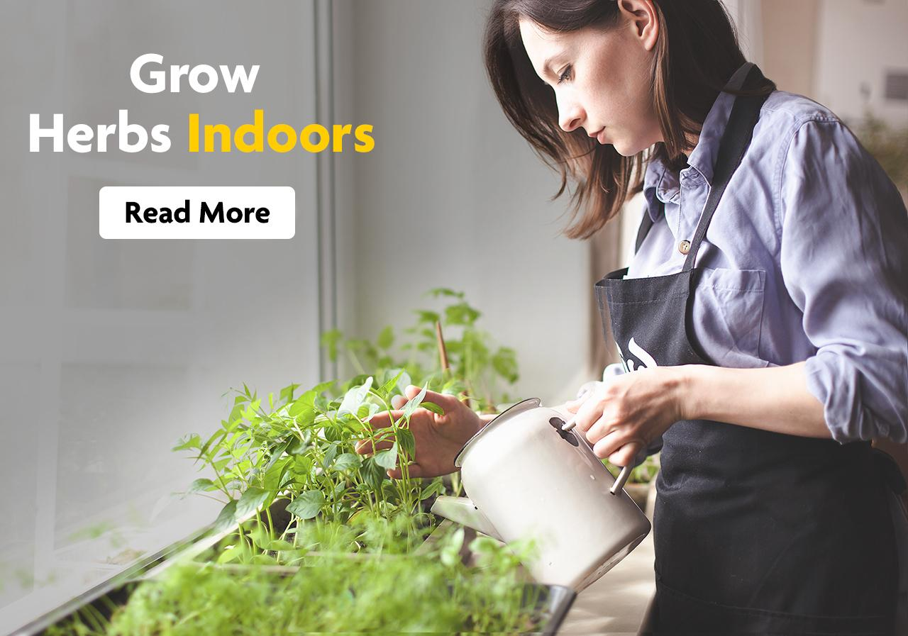 A woman in an apron waters her indoor herb garden.
