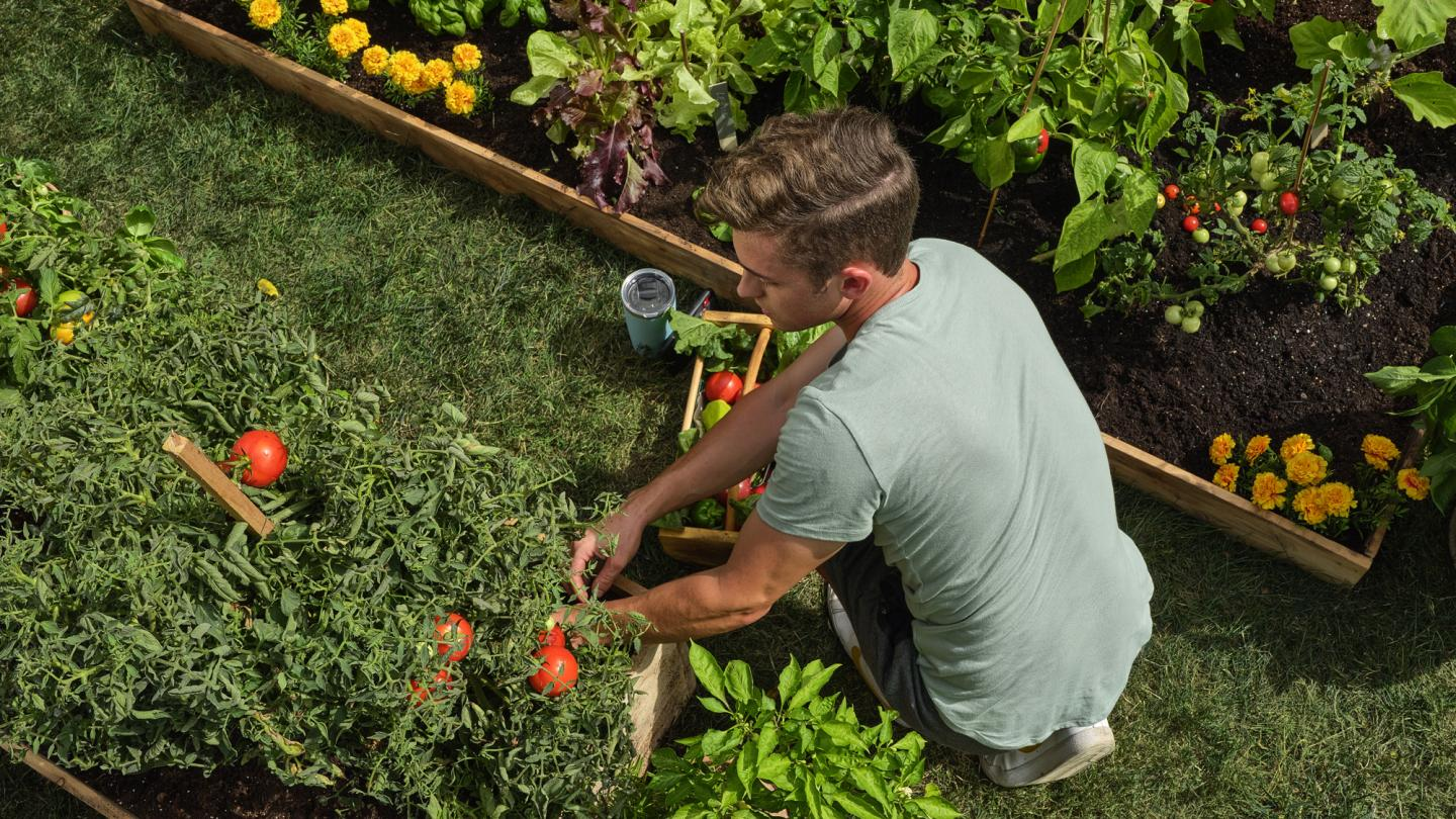 Man crouching down and tending to a garden.