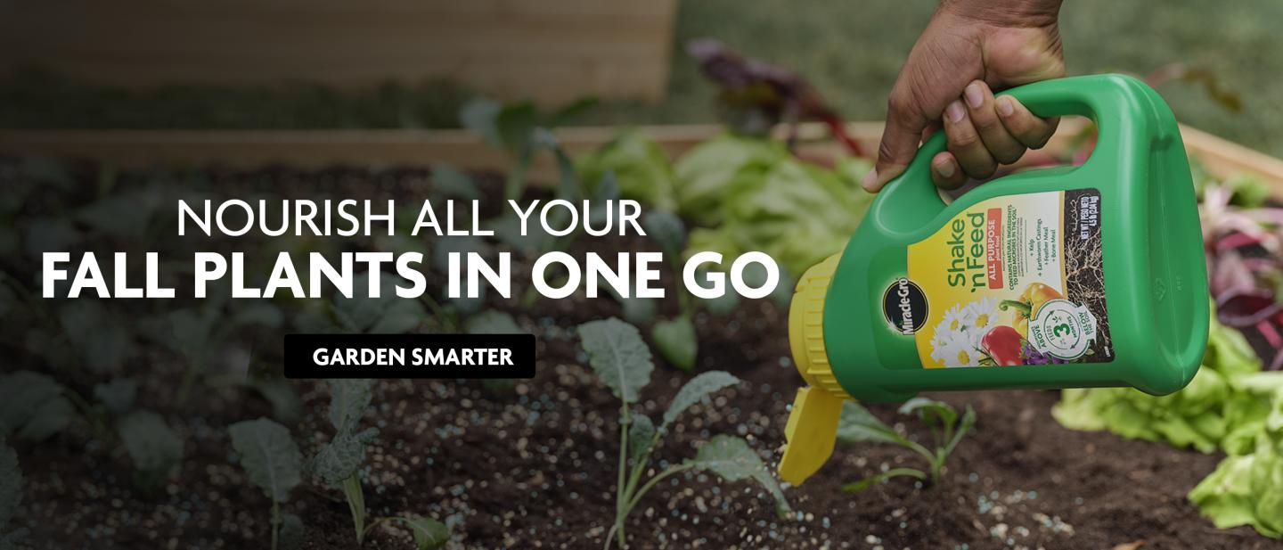 A person sprinkles Miracle-Gro Shake 'n Feed All Purpose Plant Food onto a raised bed garden.