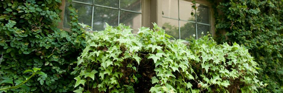 Window Box Planting Ideas & Tips