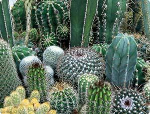 Gardening With Cactus Colors And Shapes Flower Landscaping