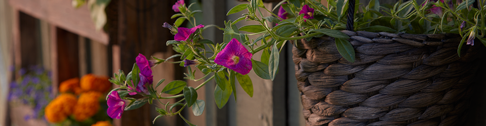 container gardening category header