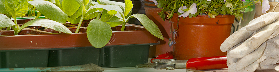 small space gardening category header