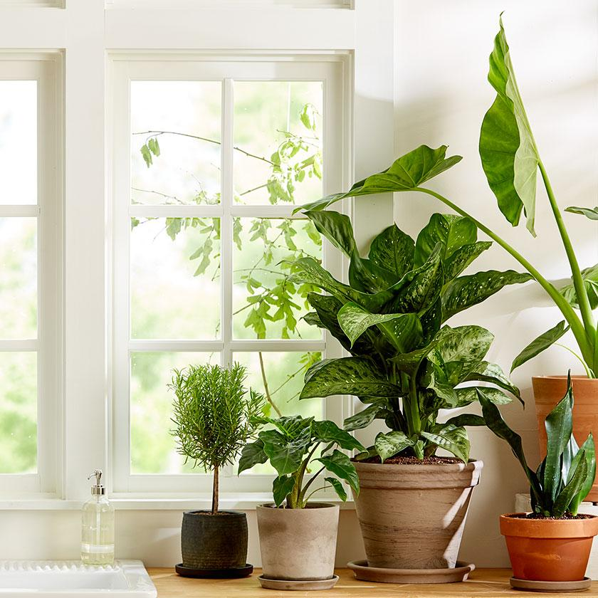 Indoor Plants that look Great!