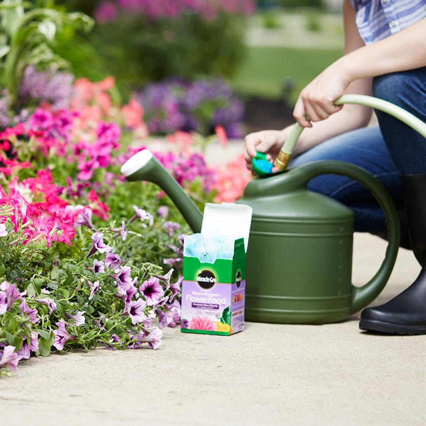Mixing Miracle-Gro Bloom Booster