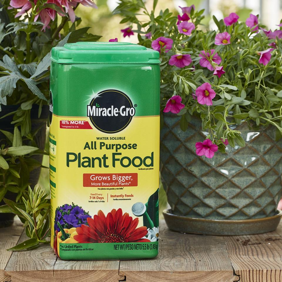 Your plants are hungry. Feed them with Miracle-Gro plant food.