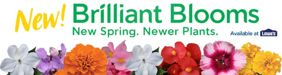 Brilliant Blooms Banner New v1