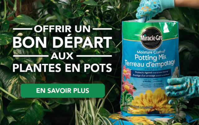 Give potted plants an excellent start