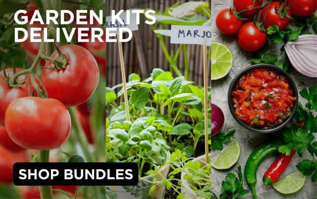 Garden Kits Delivered: tomatoes on the vine, a variety of herbs, fresh salsa