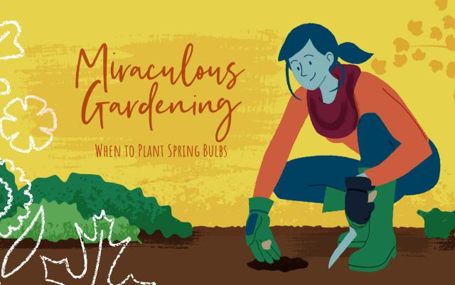 Miraculous Gardening: When to Plant Spring Bulbs - Illustration of a woman planting spring bulbs.